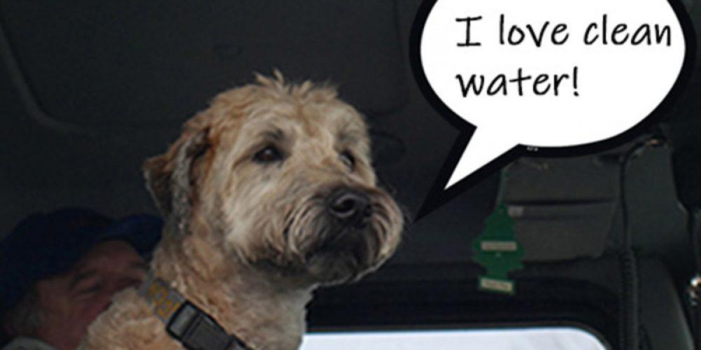 Dog_in_truck_cab